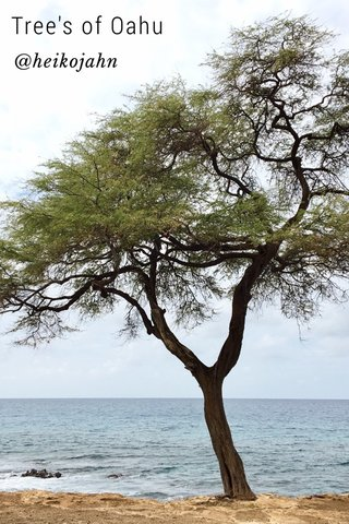 Tree's of Oahu @heikojahn