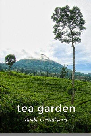 tea garden Tambi, Central Java