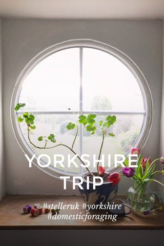 YORKSHIRE TRIP #stelleruk #yorkshire #domesticforaging