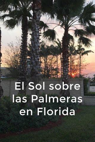 El Sol sobre las Palmeras en Florida