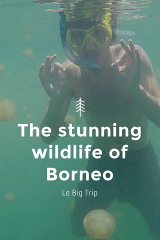 The stunning wildlife of Borneo Le Big Trip