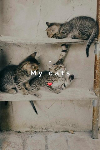 My cats ❤