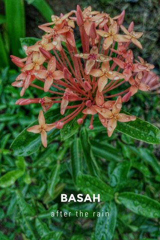 BASAH after the rain