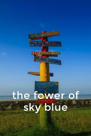 the fower of sky blue