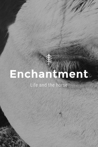 Enchantment Life and the horse