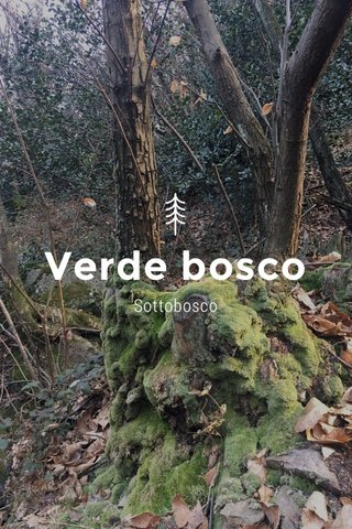 Verde bosco Sottobosco