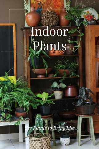 Indoor Plants Use Plants to Bring Life