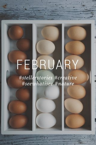 FEBRUARY #stellerstories #creative #seewhatisee #nature