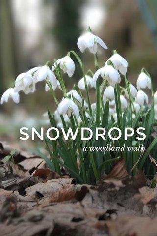 SNOWDROPS a woodland walk