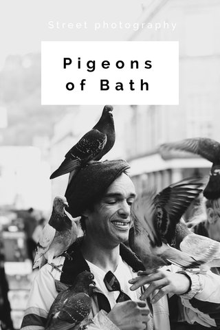 Pigeons of Bath Street photography