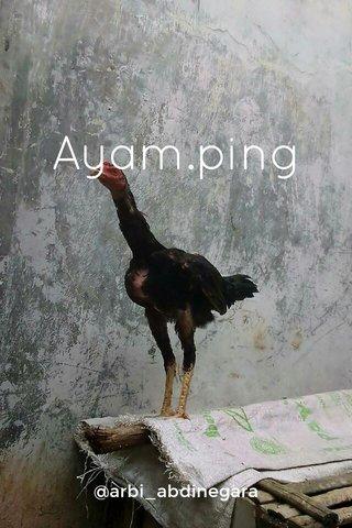 Ayam.ping @arbi_abdinegara