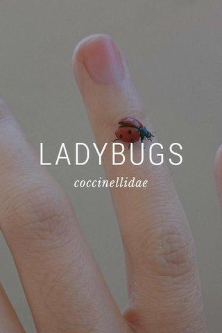 LADYBUGS coccinellidae