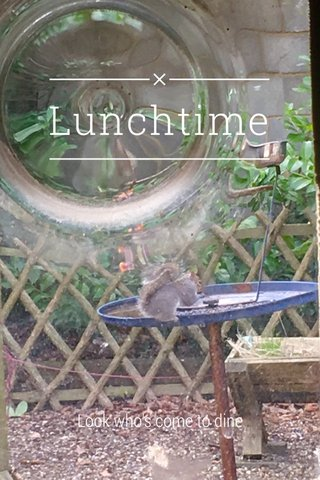 Lunchtime Look who's come to dine