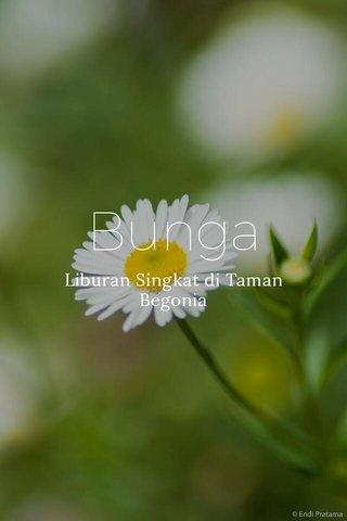Bunga Liburan Singkat di Taman Begonia