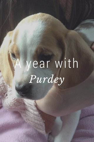 A year with Purdey