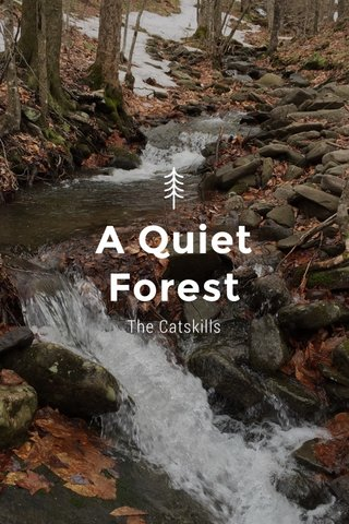 A Quiet Forest The Catskills