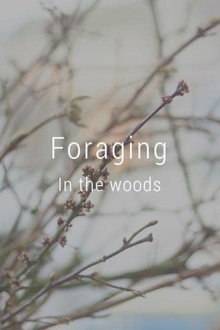 Foraging In the woods
