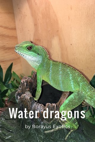Water dragons by Borayus Exotics