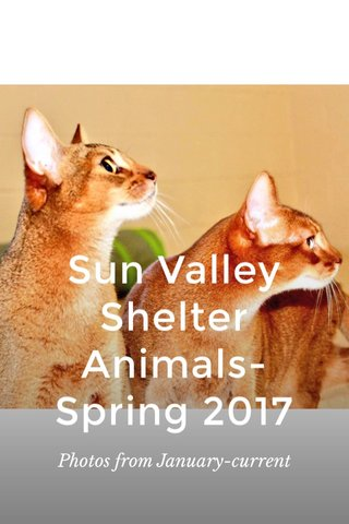 Sun Valley Shelter Animals-Spring 2017 Photos from January-current
